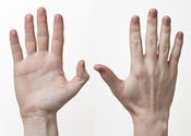 Main_thumb_240px-human-hands-front-back